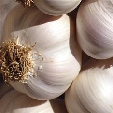 Active Health: Garlic 20:1 Extract